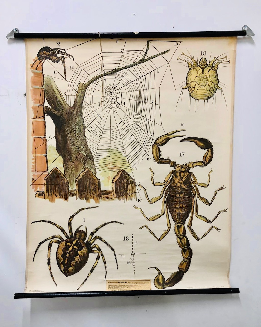 Eds insect poster